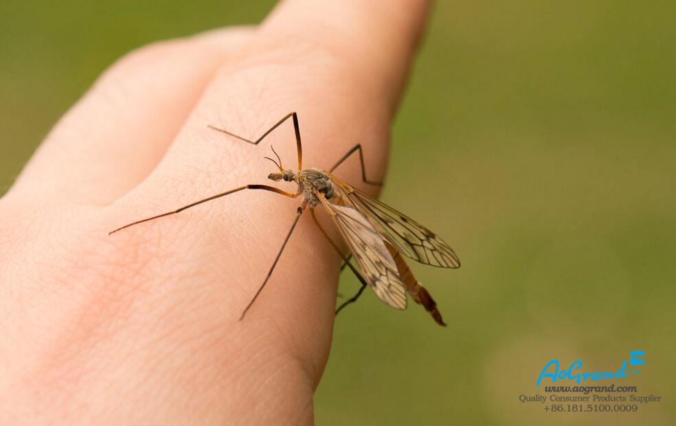 The Way for Mosquitoes to Choose Its Prey